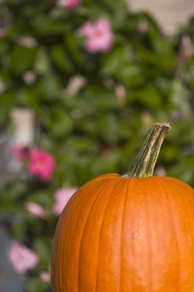 PumpkinLoRes