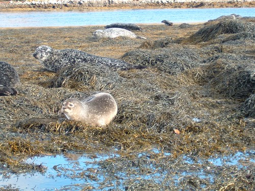 Dia 06 - 25 -Skye Island - Seals