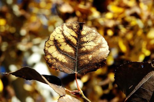 The Light in Autumn