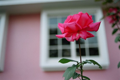 House of rose #3