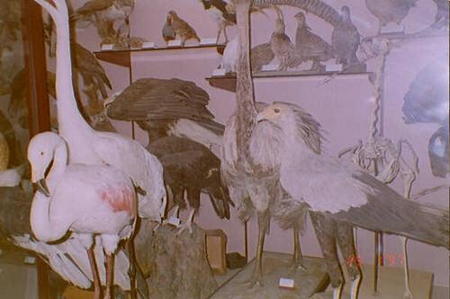 birdhall