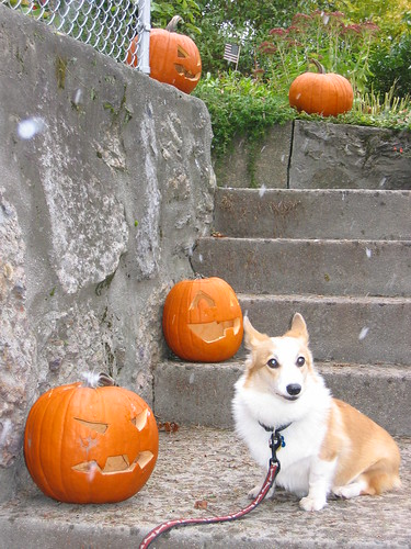 Moxie and the Pumpkins