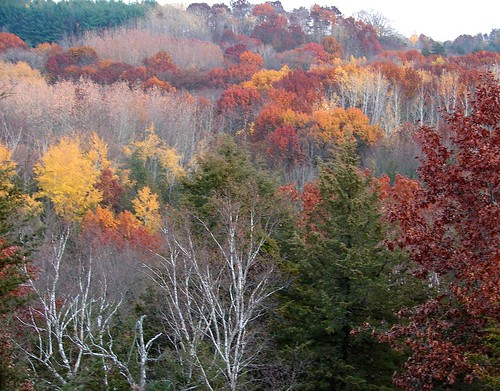 Madison Nov 05 065