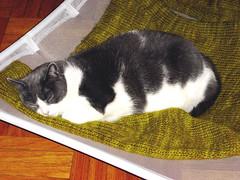 Lazy Slug