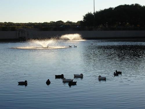Arboretum Duck Pond