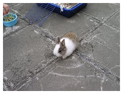 新手養兔兩星期心得_第6天放風