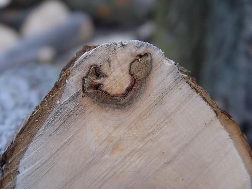 wood smile