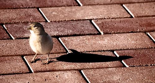 Vogel gered door poes