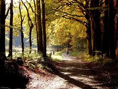 Herfst in de bossen rondom Baarn. photo by Wouter van Wijngaarden