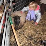 Stroking the sheep<br/>26 Nov 2008