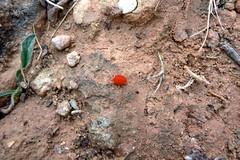 Extraño insecto