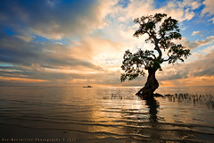 Mystic Tree... photo by Rex Maximilian