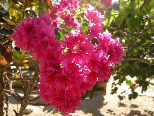 Экзотические цветы. Экзотические растения. Тропические растения. Тропическая флора