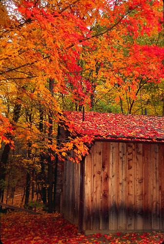 Fall-West MASS -Park Shed