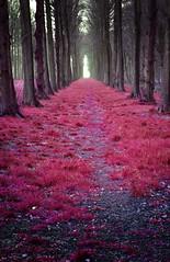 """Mystic Forest"" photo by Sander Copier"