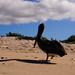 Ecuador and Galapagos-1477 © Bart Plessers