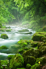 Green stream and fallen leave IMG_6518_small.jpg photo by phunter 好人