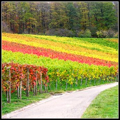 Last View at the Vineyard - Fall Landscape in Germany photo by Batikart