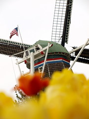 DeZwaan Windmill . . . from the Netherlands