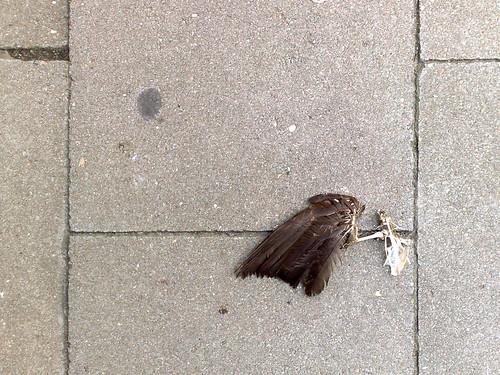 Een dood vogelken