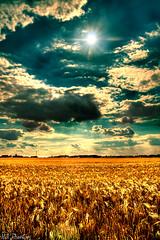 Summer field photo by Vivid~David