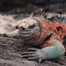 Ecuador and Galapagos-2105 © Bart Plessers