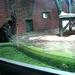 Chester Zoo V