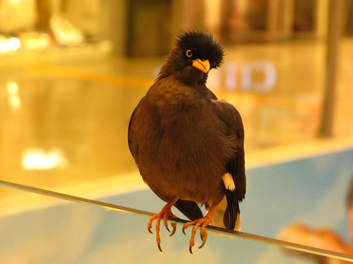 Bird in a Mall