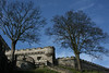 Norwich castle trees