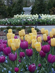 5. Healing Garden in Spring