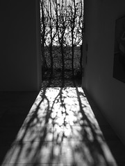 I see shadows photo by Rainer ❏