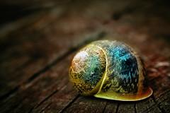 """King Snail"" photo by Sander Copier"