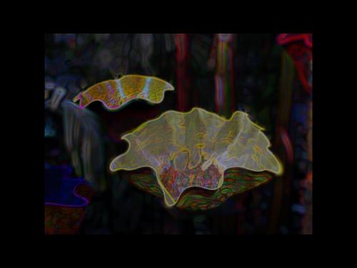 ambient   botanicals amp  fluid