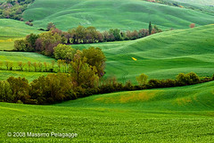 Primavera in Toscana 12 photo by Massimo Pelagagge