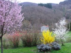 Primavera?!?