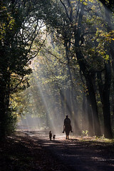 Sun rays at Lage Vuursche forest photo by KennethVerburg.nl