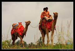 Original Nomads