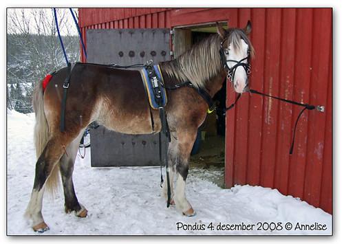 pondus-04des2008-01