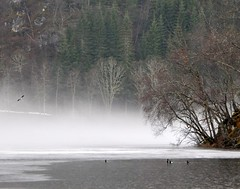 fog lake ice forest birds photo by Martin Ystenes - http://hei.cc