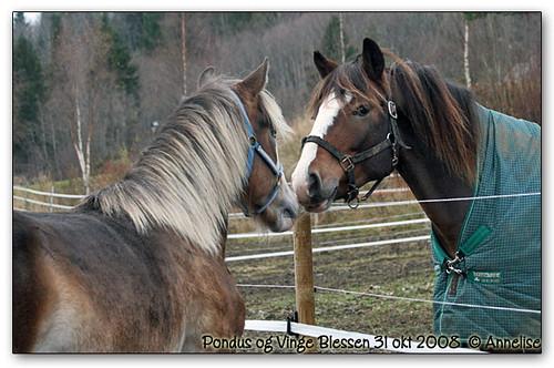 pondus31okt2008-01