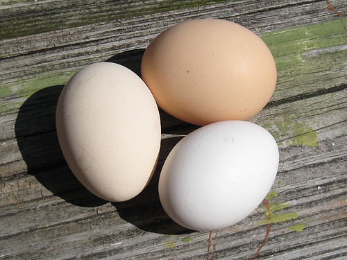 eggsthree