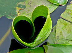 Green Heart photo by ash2276