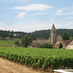 Southern Burgundy Vineyards