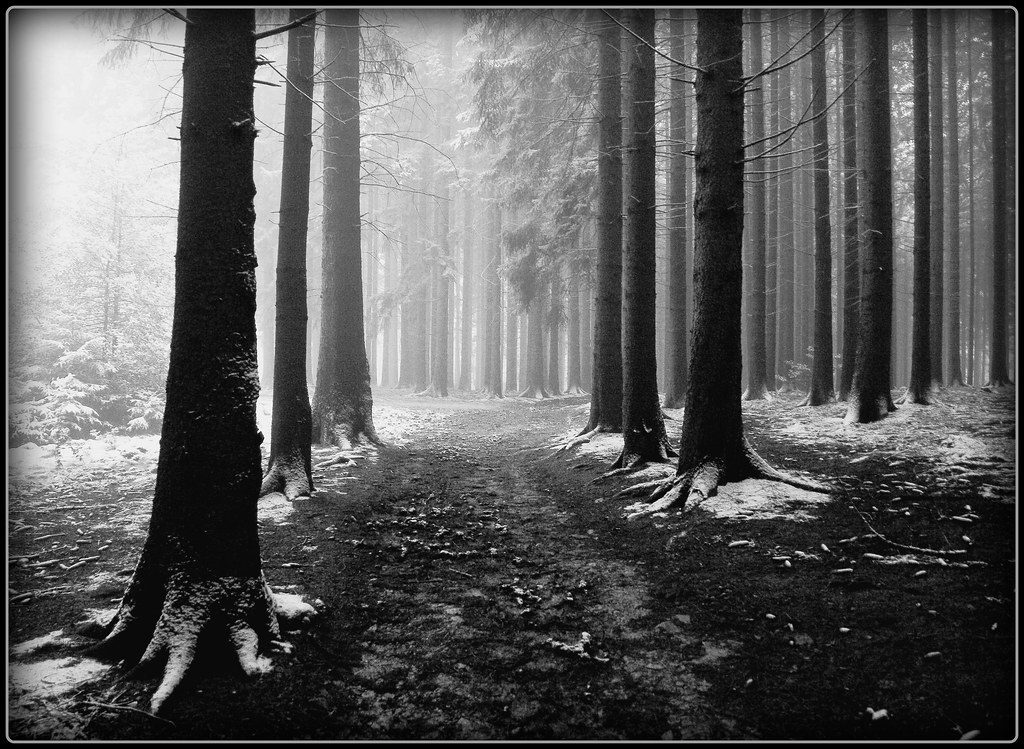 Winterwald - go left or right photo by NPPhotographie