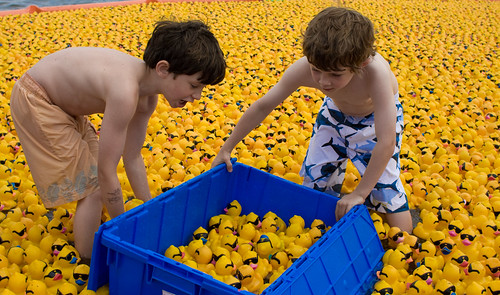 ducks, lots of