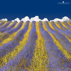 Lavender Heaven photo by larsvandegoor.com