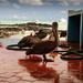 Ecuador and Galapagos-1961 © Bart Plessers