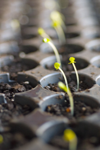 first seedlings 08