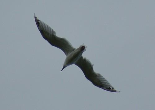 Sony A200 Birding 381-1
