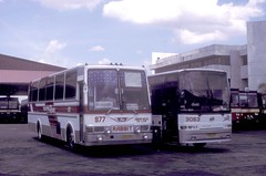 Philippine Rabbit Isuzu (1559) Hino CVC-646 (977) UD Nissan CVK-918 (3063) and Isuzu (217) bus station (terminal), Tarlac Tarlac, Philippines. photo by express000